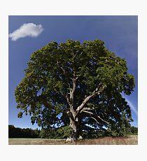The Saintly Oak Tree Photographic Print