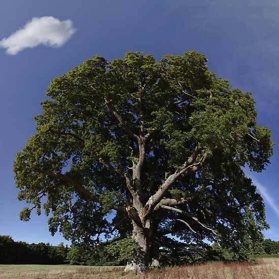 The Saintly Oak Tree by TJ Devadatta Best