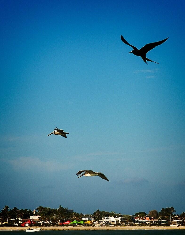 Birds over Progreso by Yukondick