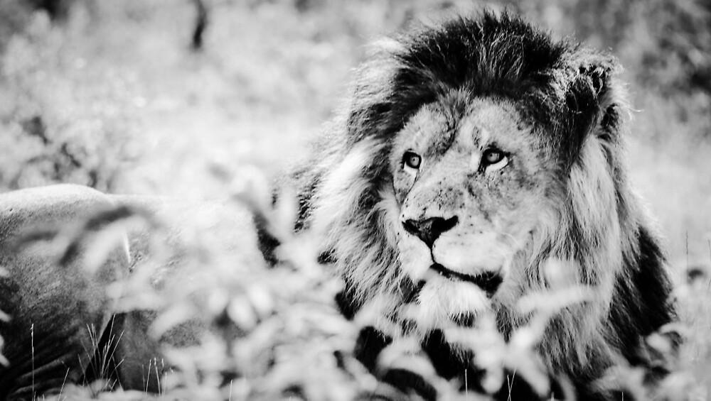 Black & White Lion by PinkFoxy