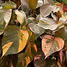 Foliage by coffeeflavour
