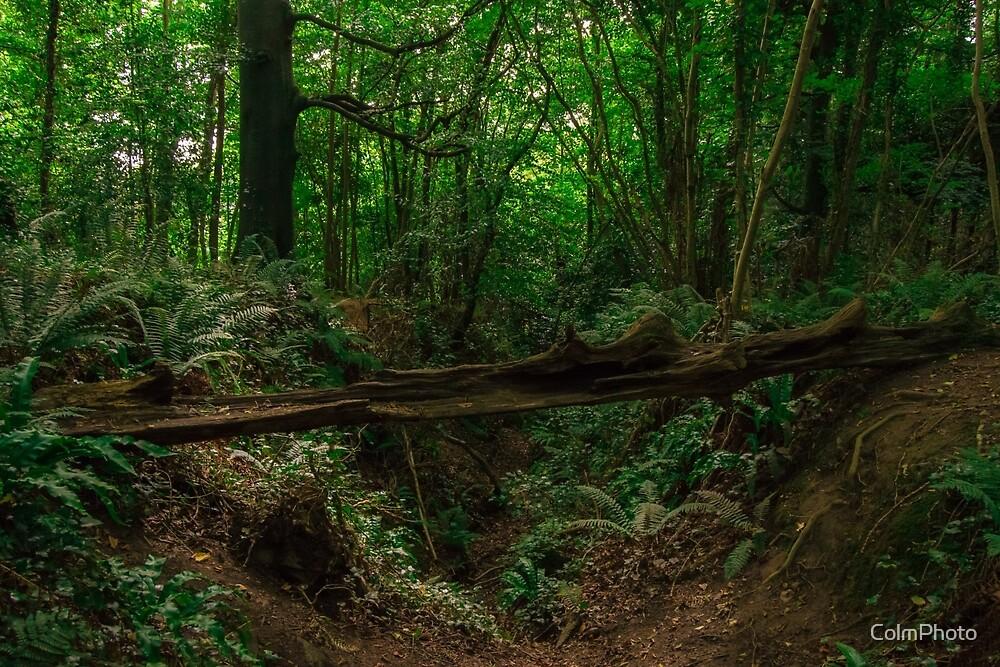 Irish Wilderness  by ColmPhoto
