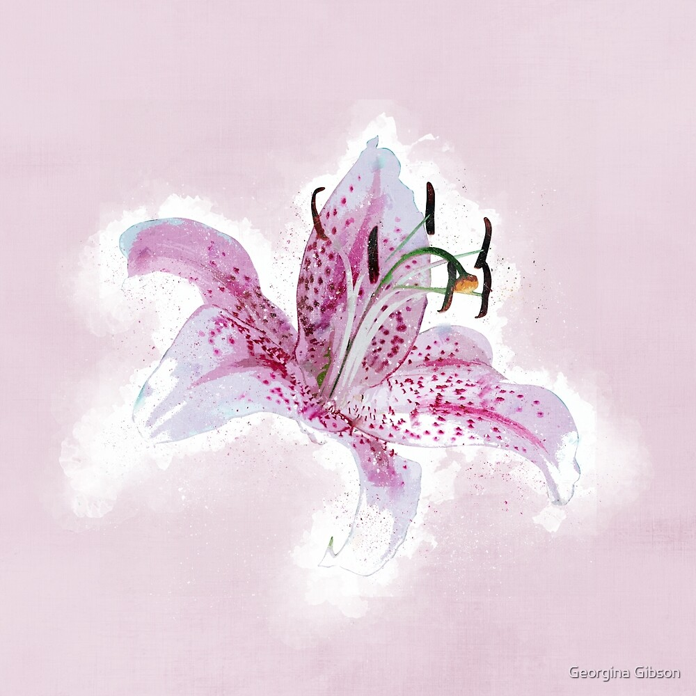 Lilly Pink by Georgina Gibson