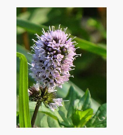 Little Wild Flower Photographic Print