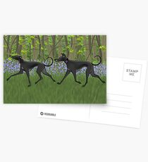 The Bluebell Wood Postcards