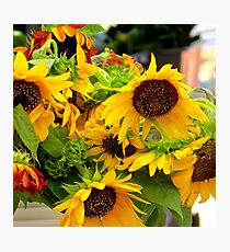 Bunch of Sunflowers Photographic Print