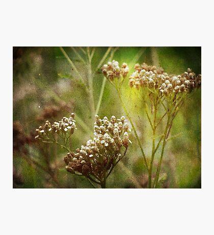 wild grasses 15 Photographic Print