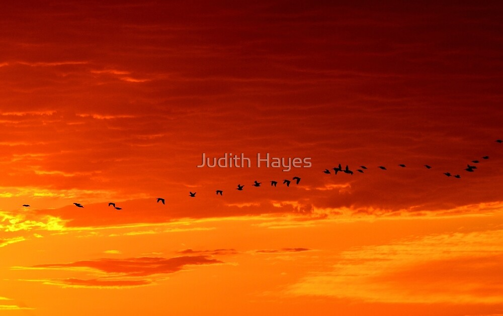 Geese at Sunset by Judith Hayes