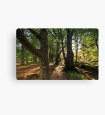The Irish Forest / Game of Thrones location Canvas Print