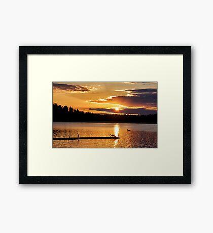 Golden swan Framed Print