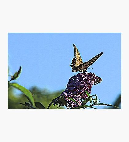 Whimsical Butterfly Photographic Print