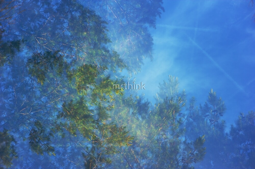 Looking Through Trees - Filtered Sun by mrthink