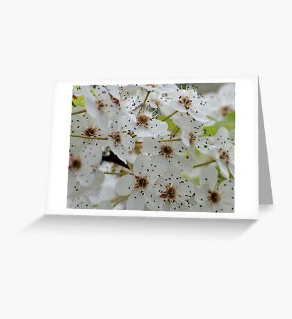 Acceptance, Survival; (Read Description) Greeting Card