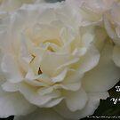 For You; La Mirada, CA USA by leih2008