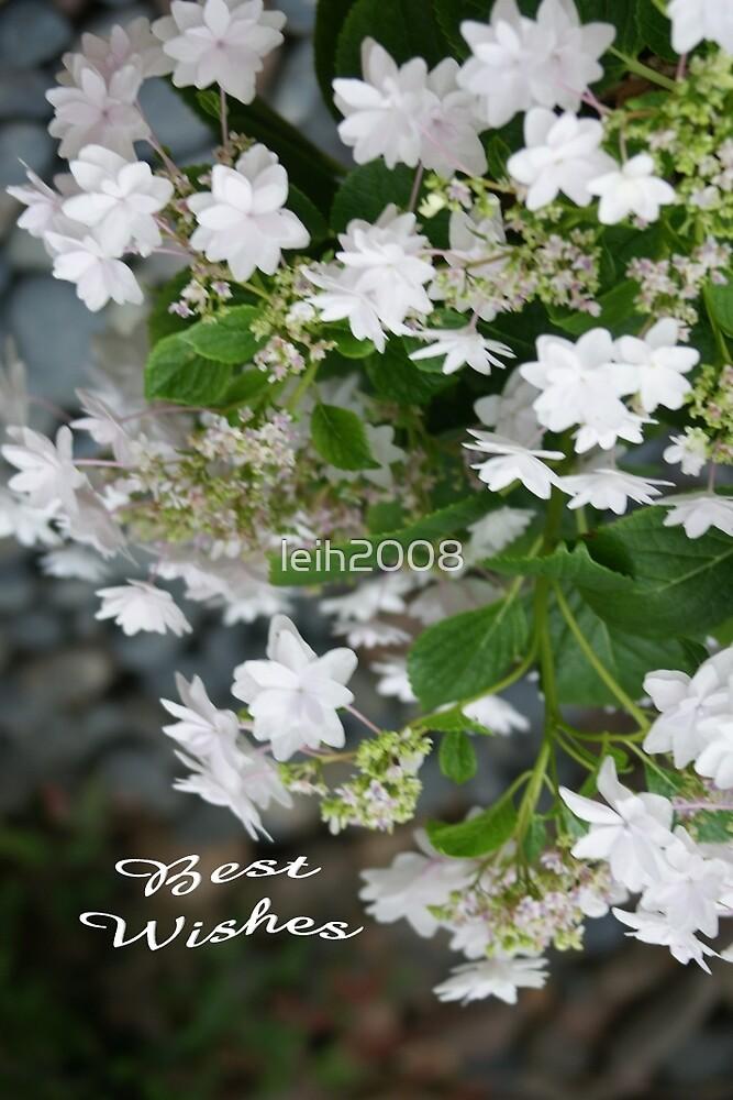 Love, Lace (Hydrangea White Lacecap) Congratulations! by leih2008