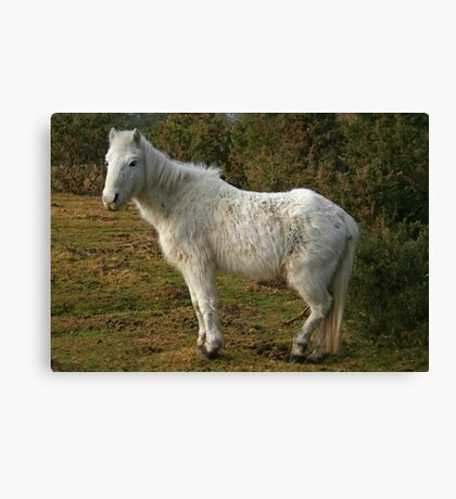 Forest Pony Canvas Print