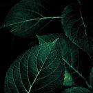 Dark Leaves I by Mareike Böhmer