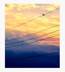 Wire Bird Photographic Print