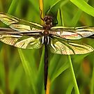 Dragonfly In Brown And Yellow by taiche