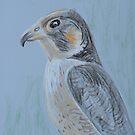 Hawk by Juhan Rodrik