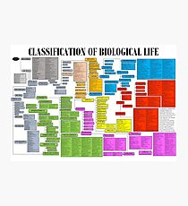 Classification of Biological Life Poster Photographic Print