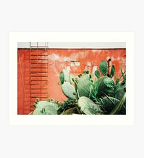Closeup on Cacti Growing in Front of Shabby Red Wall Shot on Porta 400 Art Print