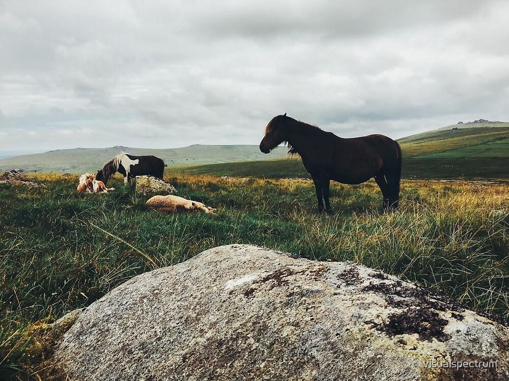 Wild Horses by visualspectrum