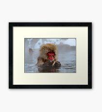 Snow monkey Japan Framed Print