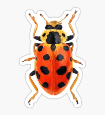 Orange Beetle Sticker