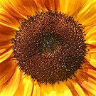 Ready for my Sunny Closeup by Heather Caye