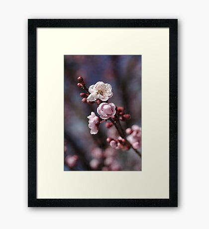 Wonderful Spring  Framed Print