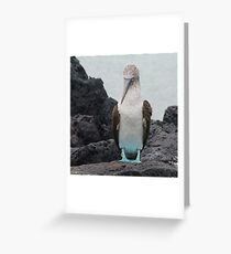 Blue Footed Boobie 1 - Galapagos Islands 2014 Greeting Card