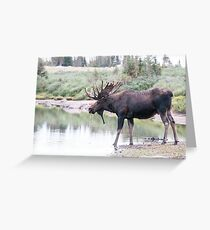 Thirsty moose a Thursday morning Greeting Card