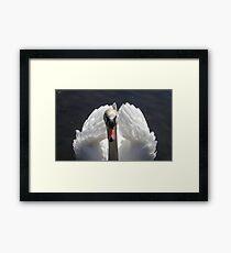 Astley Park Swan Framed Print