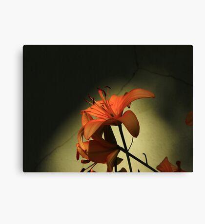 Tiger Lily-  Canvas Print