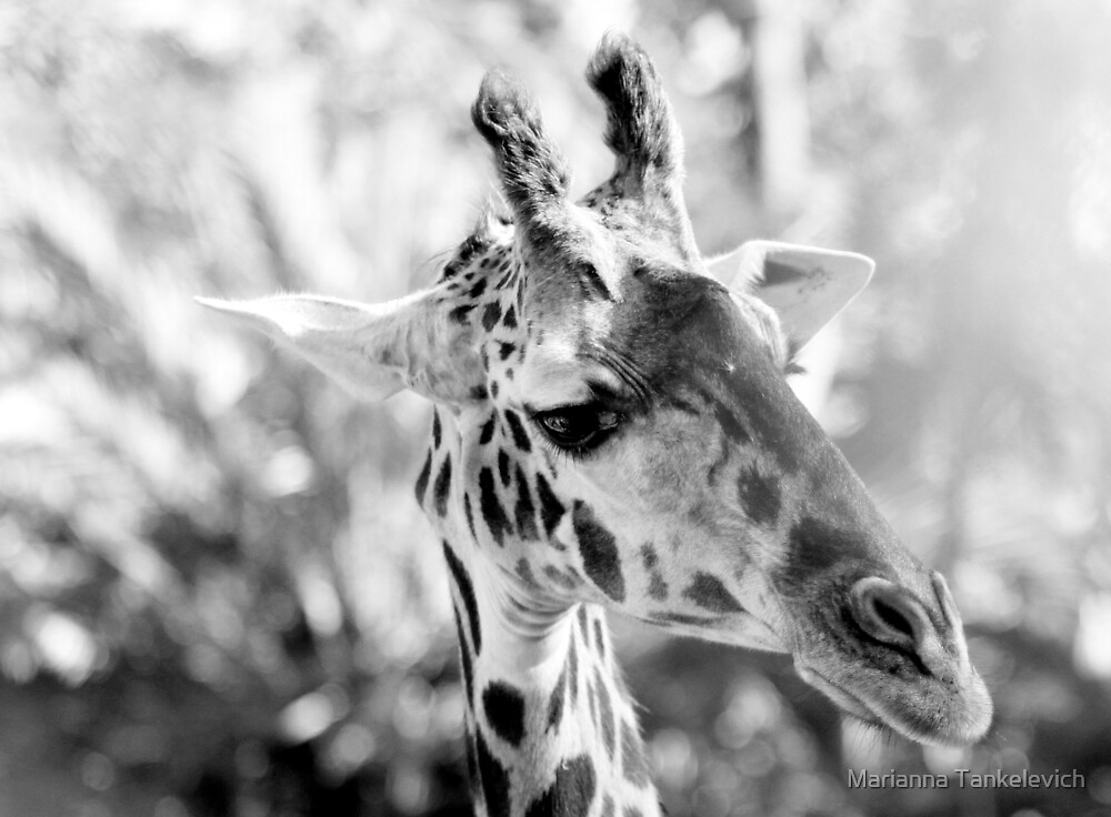 Amazing Creature with Long Lashes... by Marianna Tankelevich