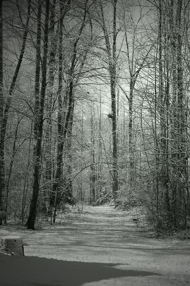 Frozen Passage by Ann Allerup