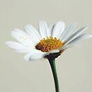 daisy by helloimbethany