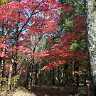 Autumn's Splendor by Ann Allerup