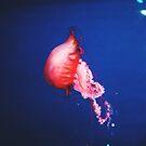 jellyfish by helloimbethany
