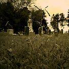 Lurking in the Grass by Ann Allerup