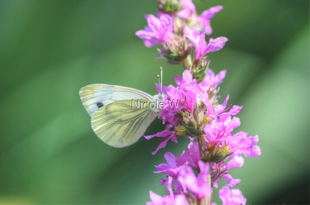 Butterfly in HDR by Nicole W.