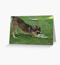 Dog with favorite toy Greeting Card
