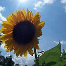 Lazy Summer Days- Holistic Homestead, TN by Ann Allerup