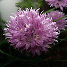 Pungent Purple Princess by Ann Allerup