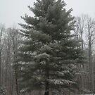 Winter's Majesty- Tennessee  by Ann Allerup