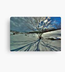 Burnt snowgums, Bogong High Plains Canvas Print