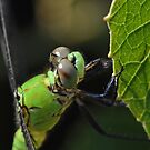 Eastern Pondhawk by William Brennan