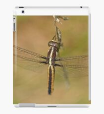 Spangled Skimmer iPad Case/Skin