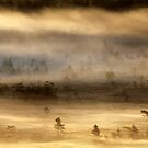 14.8.2015: Summer Morning in Torronsuo National Park IV by Petri Volanen
